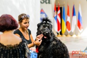 expozitie-de-frumueste-canina-44